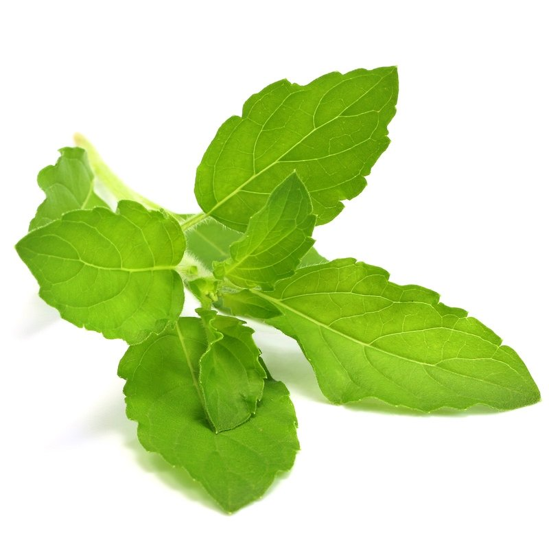 Holy Basil, Tulsi, Stress, Relief, Stress management, herbs, herbal therapy, natural, organic, holistic